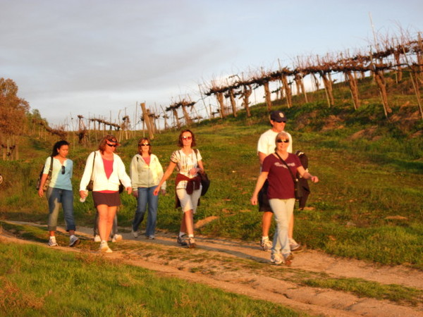 Vineyard Walk and Wind Festival Experience